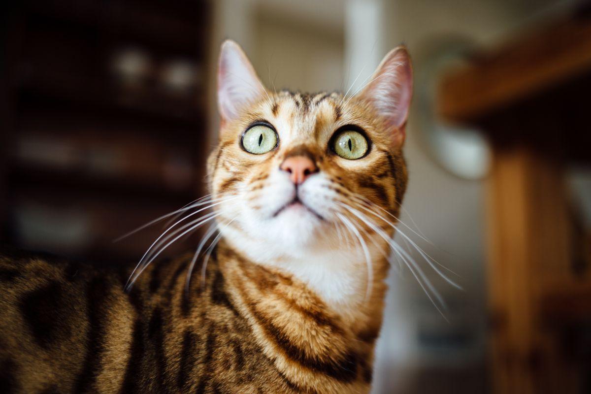 Green Cat Eyes, de Paul