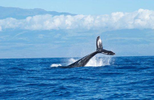 Whale Tale, by Abigail Lynn