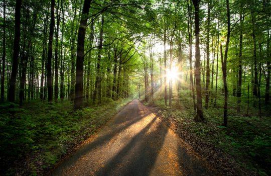Foto de bosque.