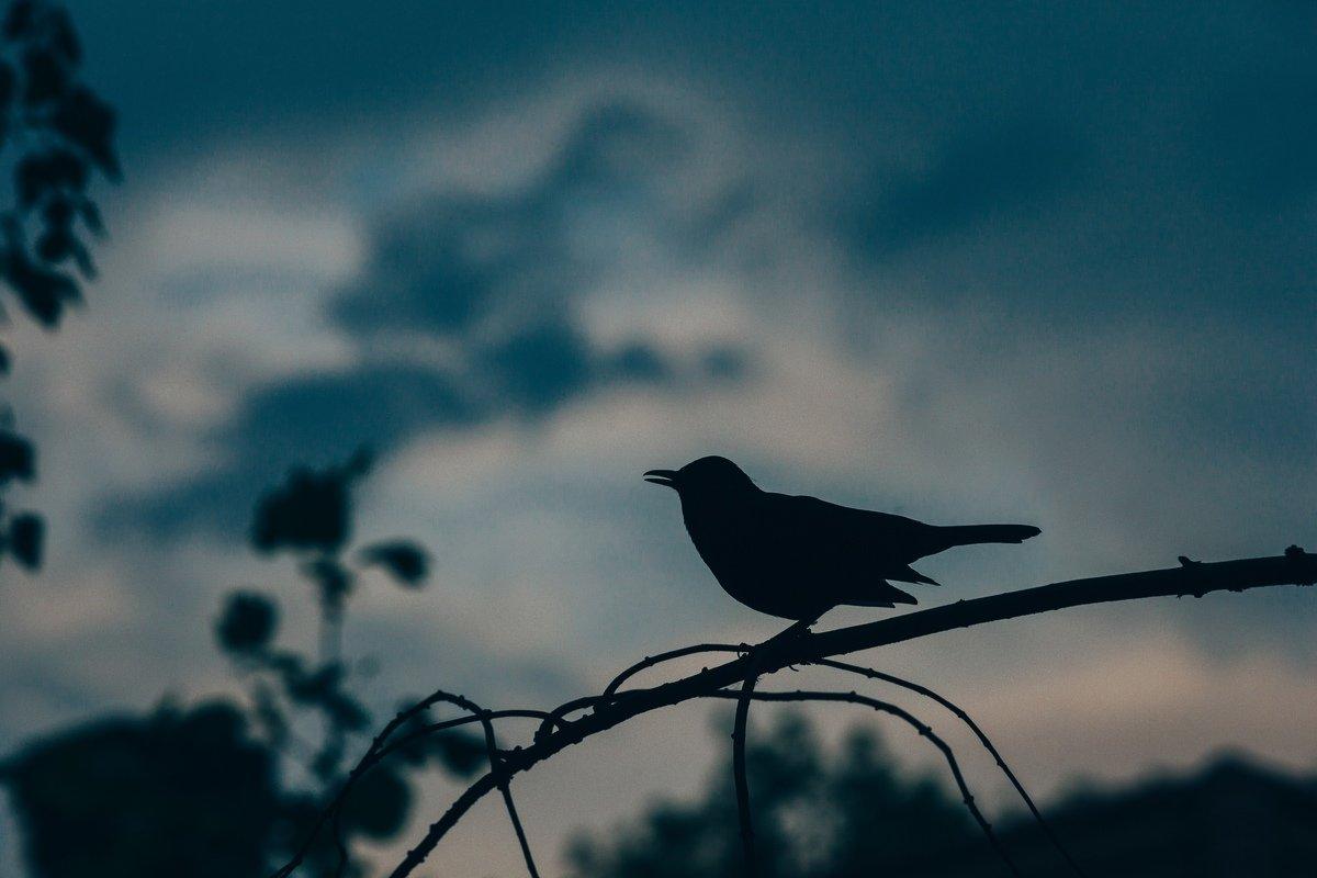 Bird at Sunset, de Benjamin Balazs