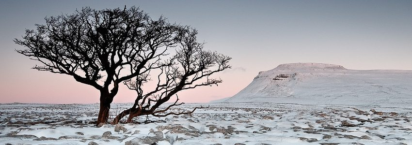 Photo of a landscape with snow and a tree