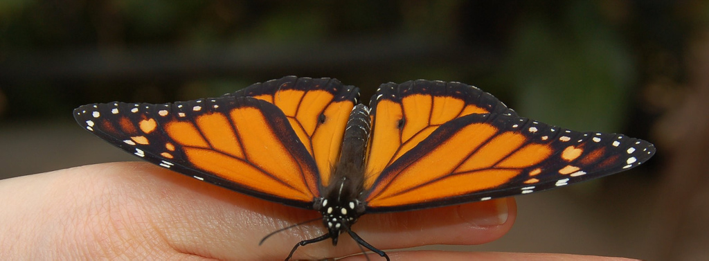 Picture of Butterfly by Scott Ableman