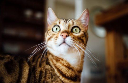 Green Cat Eyes, by Paul