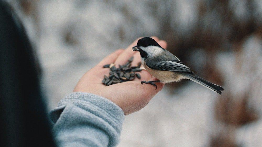 Guy feeding a bird